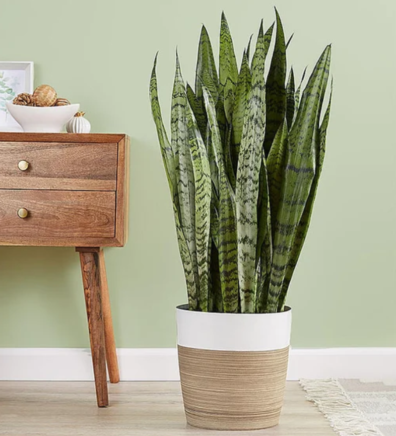 house plants best for sleeping