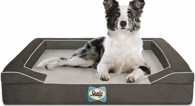 sealy top dog beds for staying cool