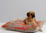 Bright Modern Home Dog Bed