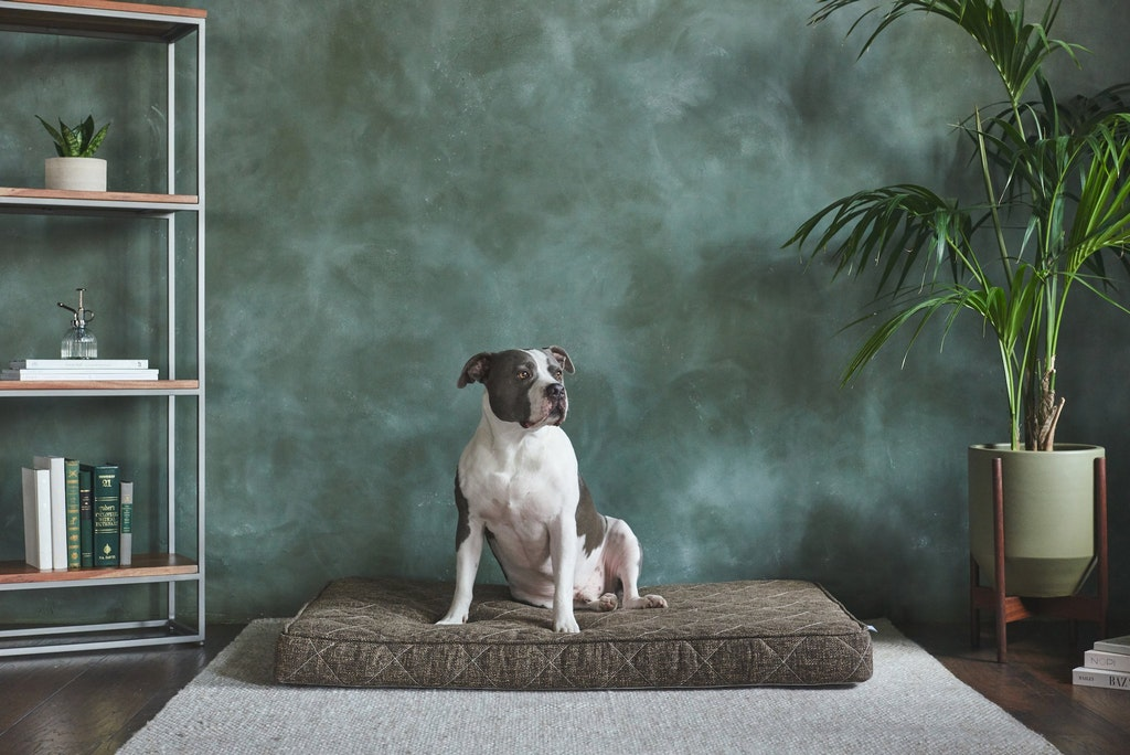 cozy mattress dog bed