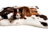 The Most Stylish Dog Beds