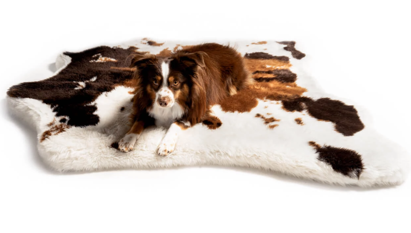 the most stylish dog beds