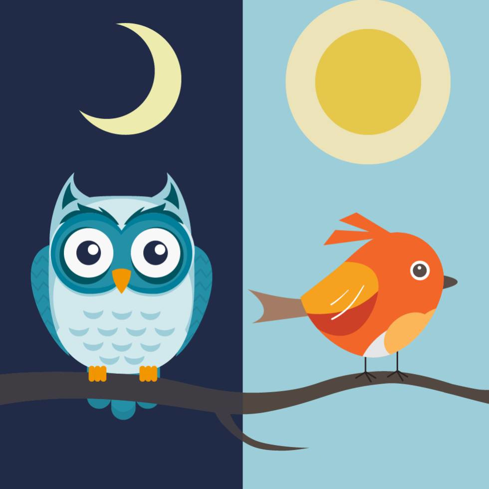 night owl vs early bird who really gets the worm