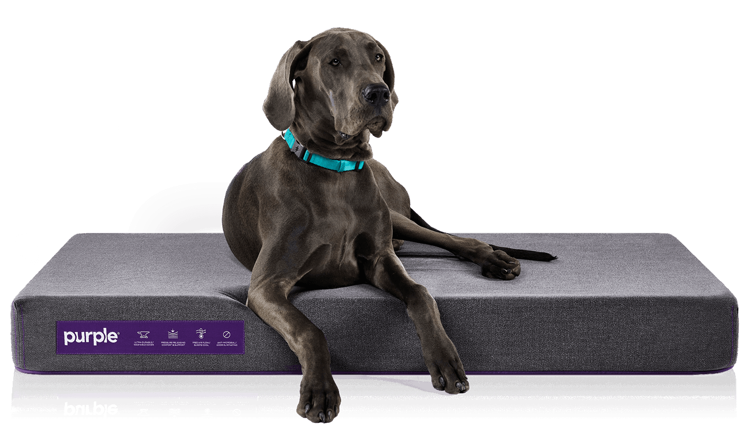 dog beds to relieve joint pain