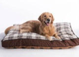 Top Orthopedic Dog Beds