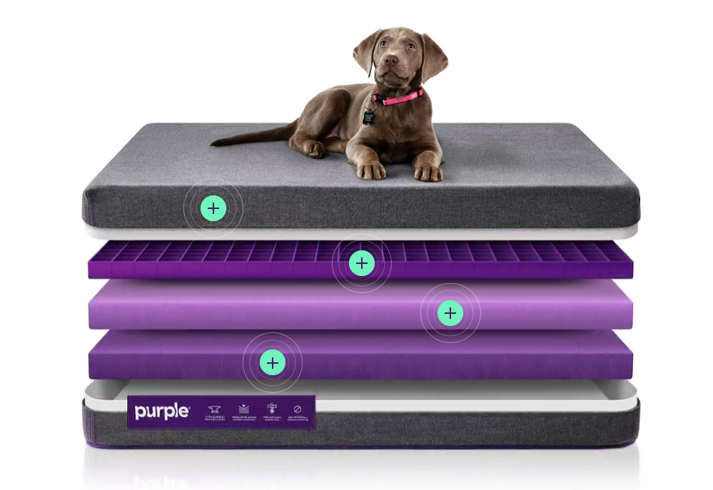 comfortable pet beds for dogs and cats