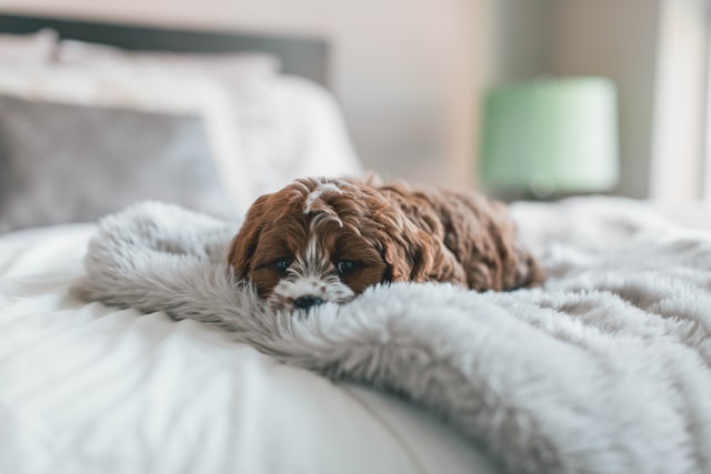 get a pet to snuggle with for companionship