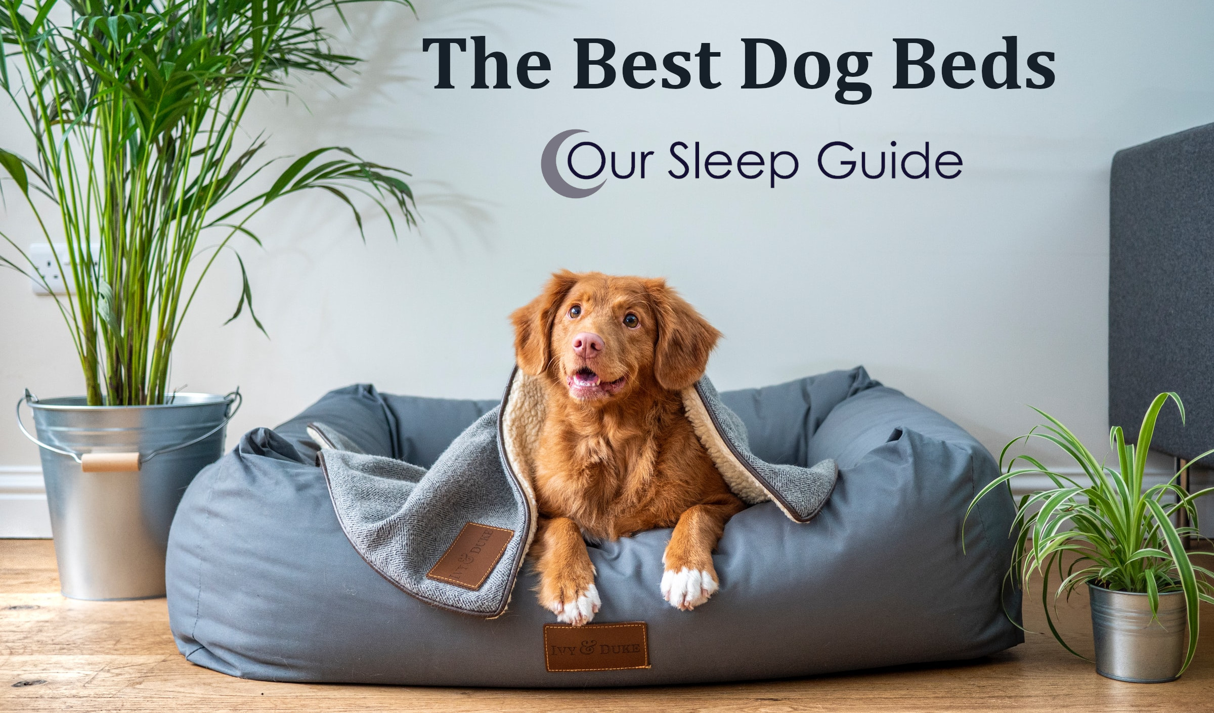 the best dog beds reviews our sleep guide