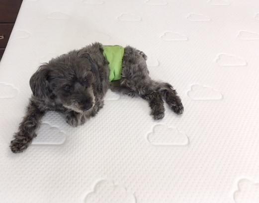 puffy mattress sleeping cool