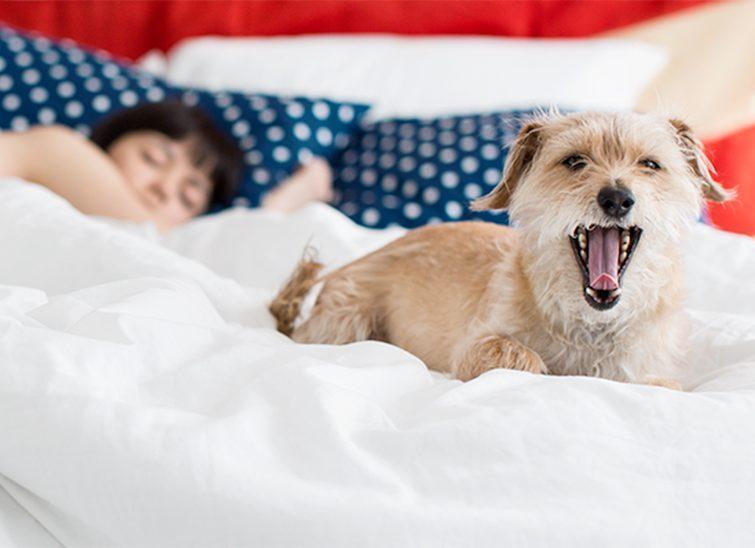 winkbed dog