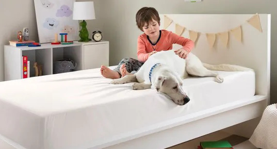 pet dander and other allergies on your mattress