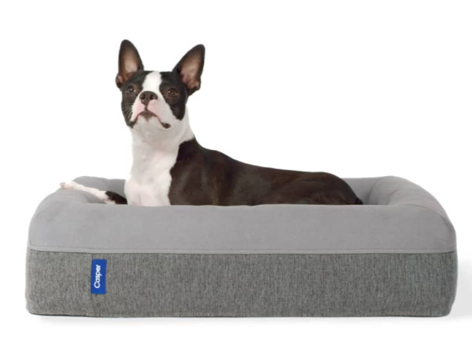 the best casper dog bed