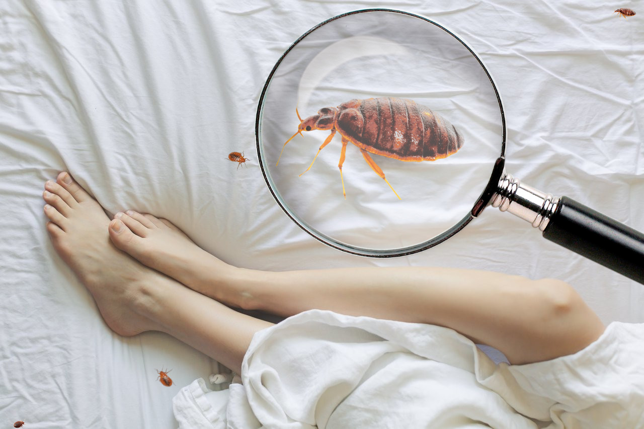how to inspect your mattress for bed bugs