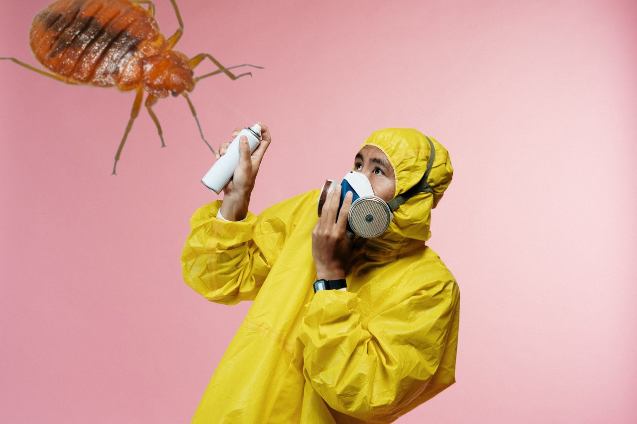 hire a professional to get rid of bed bugs