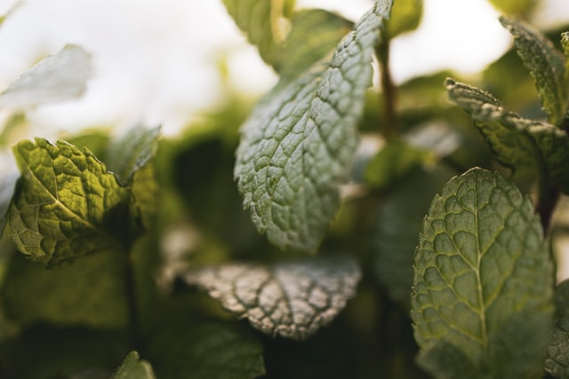 lemon balm helps to relax