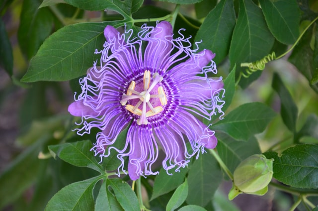best herbs to cure insomnia
