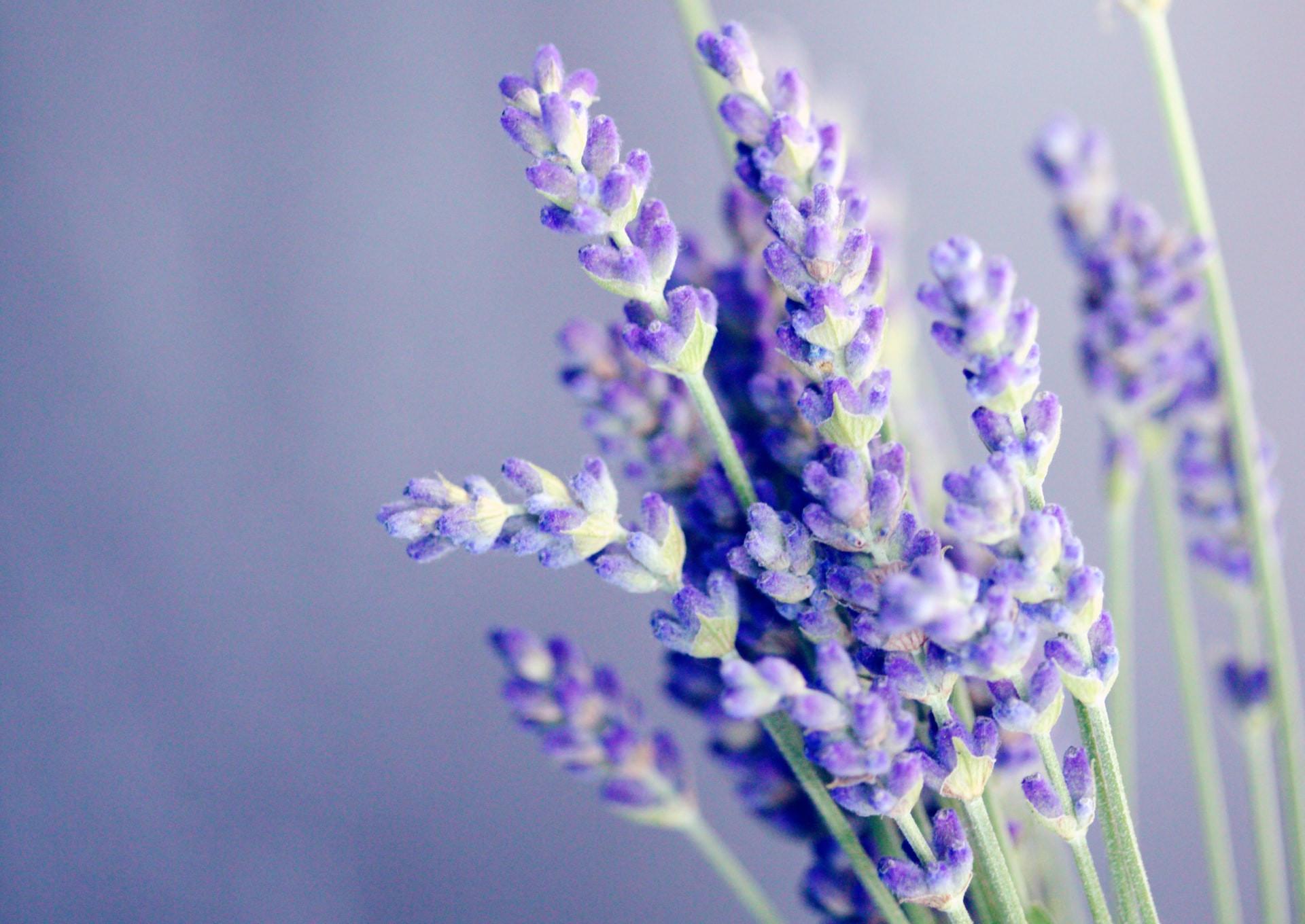 top ten herbs for sleep