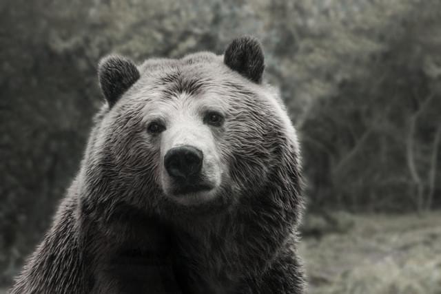 bear chronotypes sleep tips