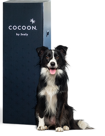 cocoon by sealy chill hybrid box