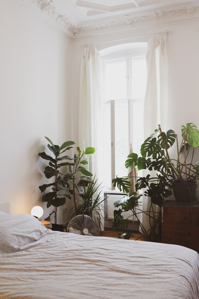 pros and cons of house plants