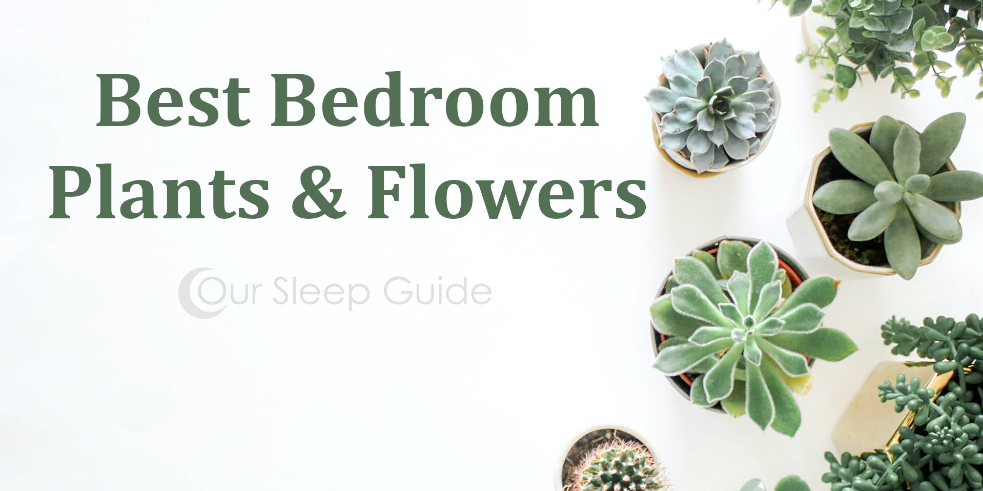 Bedroom Plants & Flowers