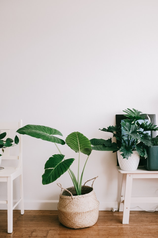 how to pick plants for your bedroom